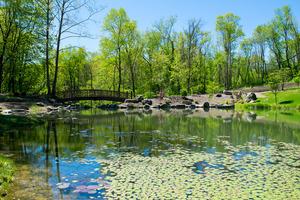 japanese-garden-lotus-pond 3